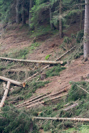 deforestation: deforestation on mountain Stock Photo
