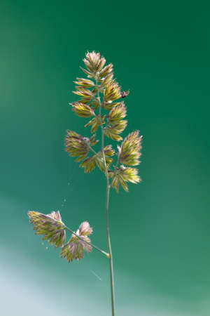 Wildflower: wildflower in the garden Stock Photo