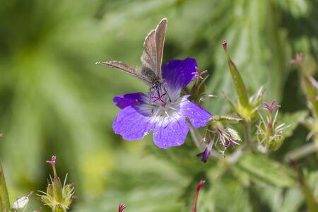 Wildflower: wildflower in mountain Stock Photo