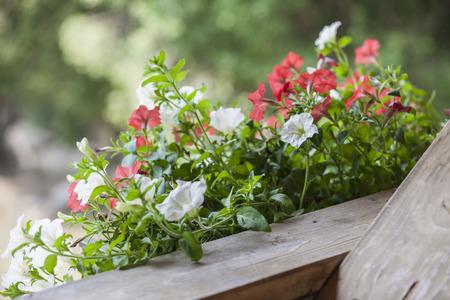 Bepflanzten Balkon Standard-Bild - 43746358