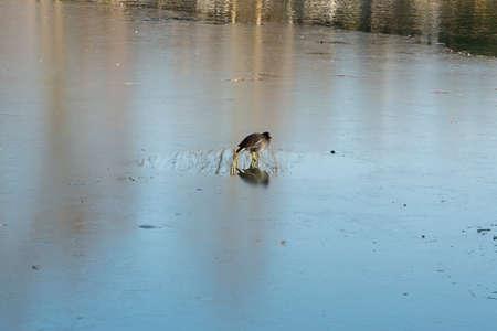 frozen lake: bird on frozen lake