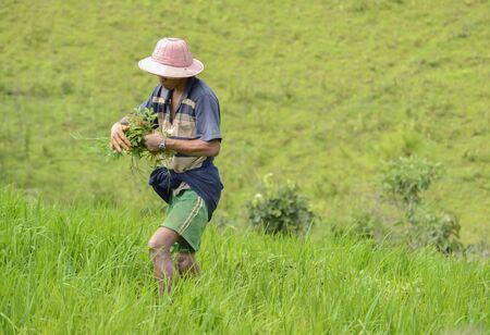operaia: People working in the fields