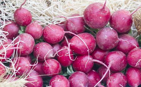 radishes: radishes at the market