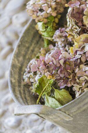 bouquet of dried hydrangeas
