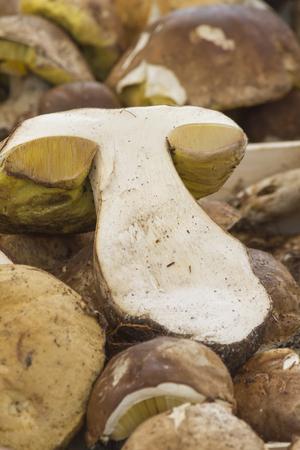 underwood: mushroom at market