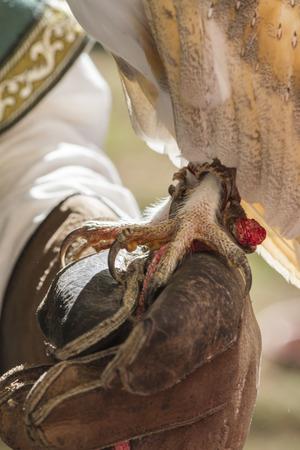 tame: legged owl tame