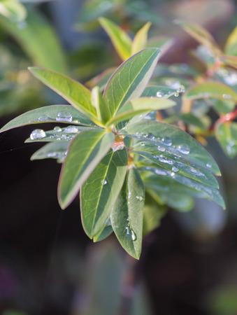 wet leaf: wet leaf in the garden