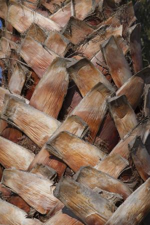tronco: palmera  Foto de archivo