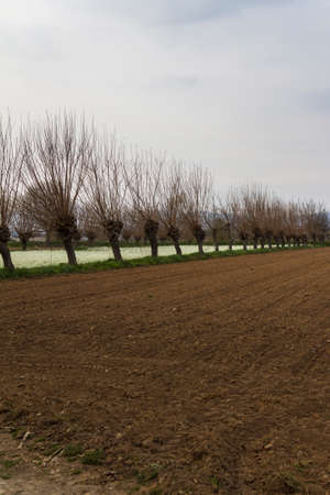 cultivated: cultivated field