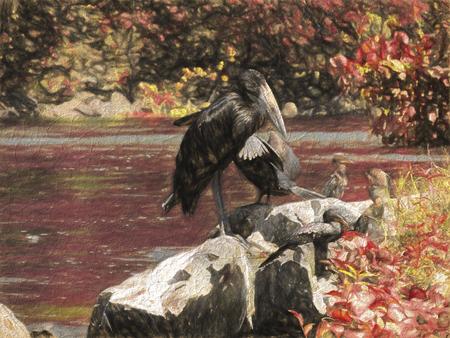 cormorant: cormorant on lake Stock Photo