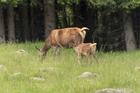 fawn: fawn with her mom