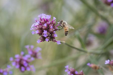 Wildflower: bee on wildflower