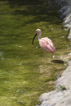 the ornithology: red bird