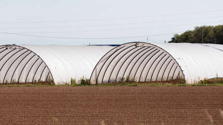 cultivation in greenhouses