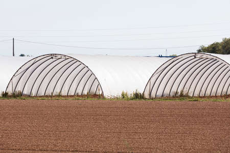 greenhouses: cultivation in greenhouses