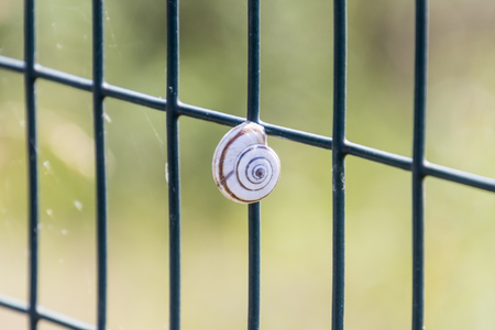 clinging: small snail clinging to the network Stock Photo