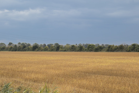 cultivated: cultivated field in autumn