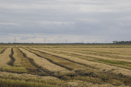 cultivated: cultivated field in autumn season