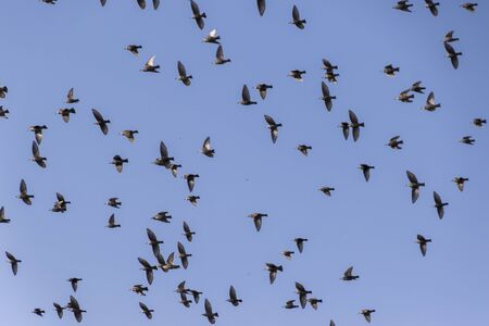 migrate: flock of birds that migrate Stock Photo