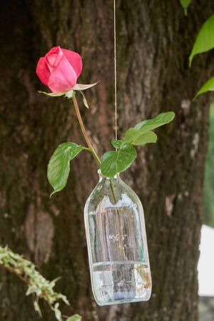 pink rose hanging in the bottle Stock Photo