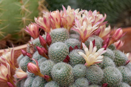 succulent plant in bloom in the vase