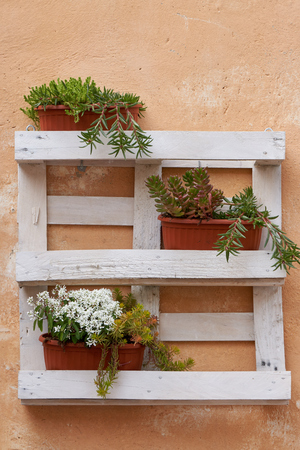 flower in the  pot on wall for decoration