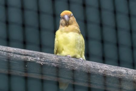 colorful inseparable parrot