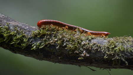 red centipede on tree