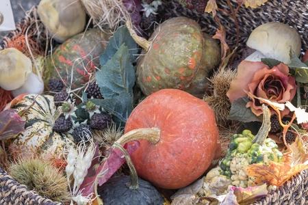 decorative pumpkin in the farm