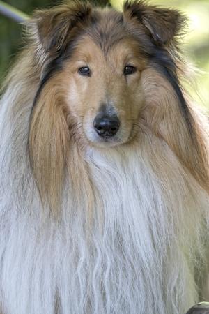 cute border collie dog at park Standard-Bild - 123776937