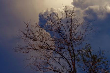 tree in the garden and cloudy sky Standard-Bild - 123776938
