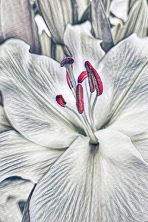 abstract white lily for holidays Stock Photo