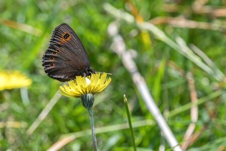 butterfly on flower in the meadow Stock Photo