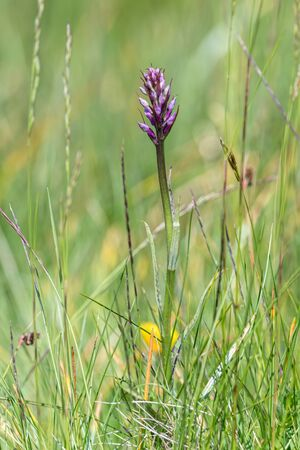wildflower in the mountain in summer season Stock Photo