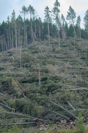 devastation after the hurricane in the mountains