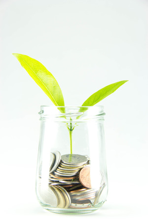 Growing plant with coin money. photo