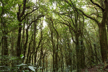 Tropical Rain forest Landscape travel at Kew Mae Pan of Doi Inthanon national park, Thailand. photo