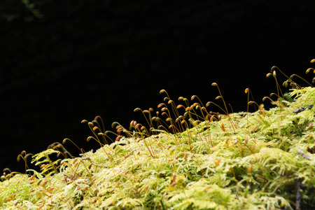 Soft green mossy tree trunk with spores silhouetted. photo