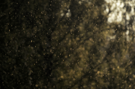 Close-up of rain drops falling and reflecting warm bright sunlight with trees in the background