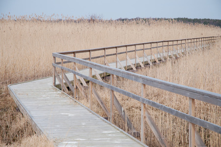 Wooden boardwalk with a railing on one side in the middle of a field of tall wheat with a grey sky in the background