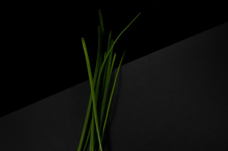 Simple and minimal bunch of vibrant green chives isolated on a two toned black background