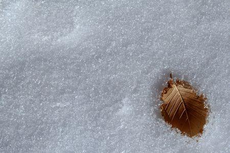 buried leaf