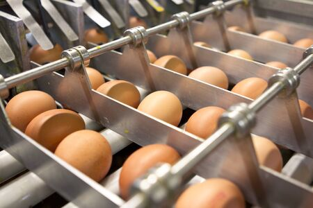 Egg farm - industrial packaging Stock Photo
