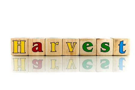 yielding: harvest colorful wooden word block on the white background