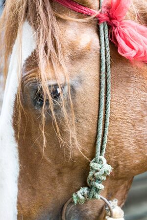 red horse: Closeup of a red horse at outside