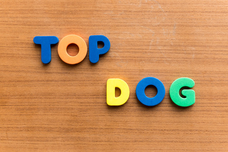 egghead: top dog colorful word on the wooden background