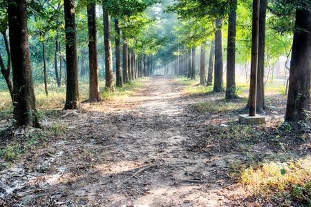 flower garden path: A path through a verdant garden