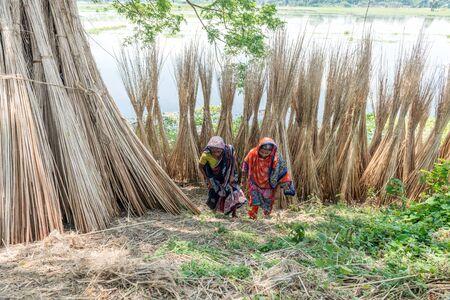 dhaka: Dhaka, Bangladesh - AUG 27, 2016 : Unidentified people are processing jute on August 27, 2016 in Dhaka, Bangladesh
