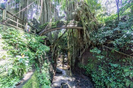 trees are in Ubud Monkey Forest at bali, indonesia