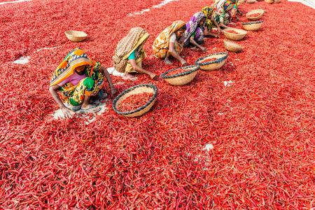 Bogra, Bangladesh - 17 februari 2017: Vrouwen werken aan het drogen van de rode pepers in de sariakandi, Bogra.